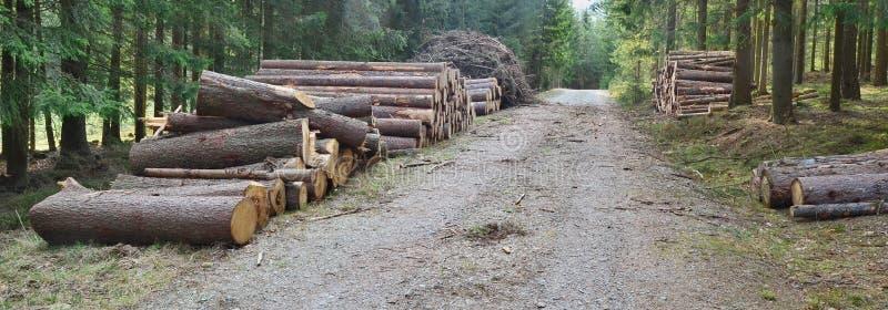 Кора жук-заразила деревья, тимберс готовый для перехода, южную Богемию стоковое изображение rf