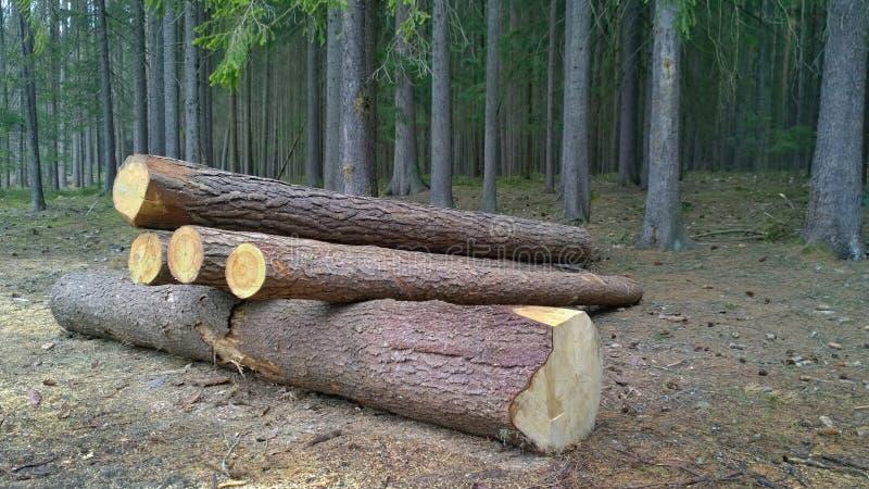 Кора жук-заразила деревья, тимберс готовый для перехода, южную Богемию стоковая фотография
