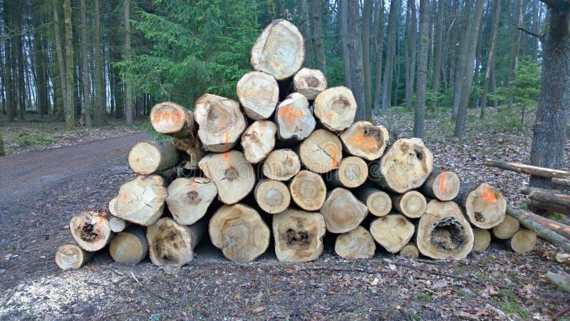 Кора жук-заразила деревья, тимберс готовый для перехода, южную Богемию стоковое фото rf