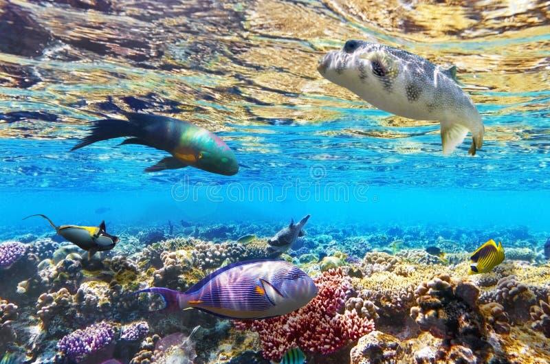 Коралл и рыбы в Красном Море. Египет, Африка. стоковое фото