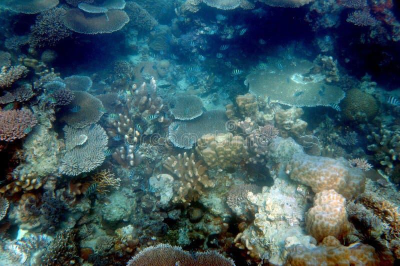 Коралловые рифы стоковое фото rf