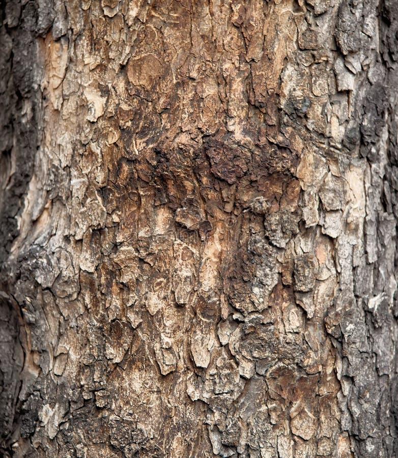 Кора старого дерева, конец вверх стоковые фото
