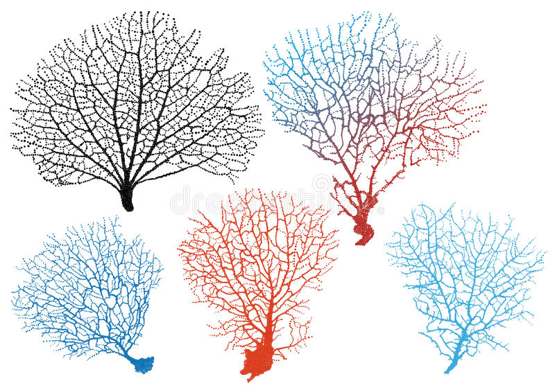 Кораллы вентилятора моря, комплект вектора иллюстрация штока