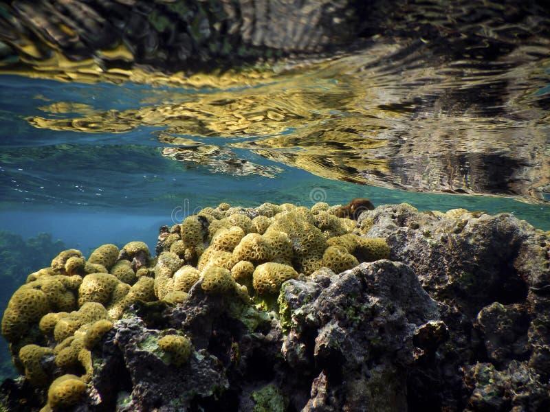 коралл стоковая фотография rf