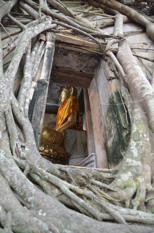 Корень дерева поглощая челку Kung Wat руин стоковое фото