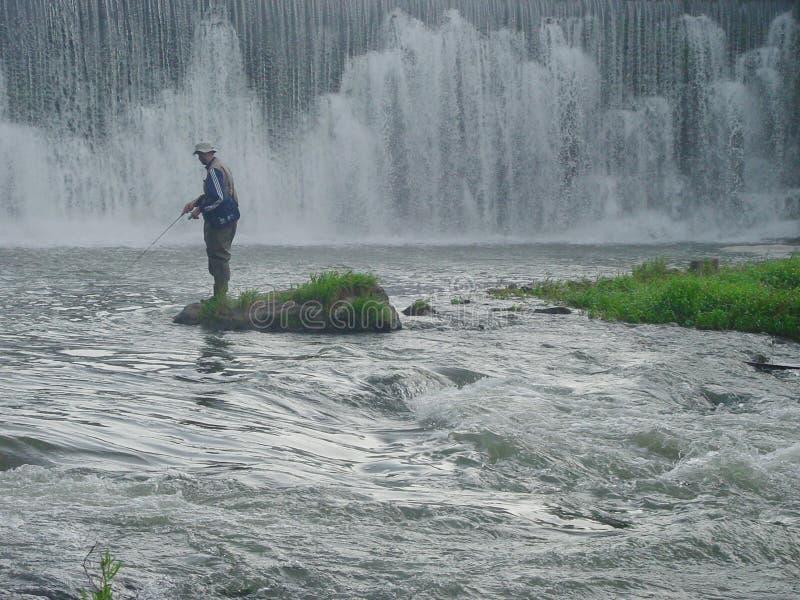 корень реки рыболовства стоковые фото