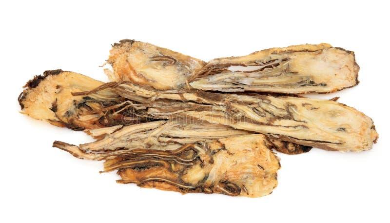 корень травы дягиля стоковые фотографии rf