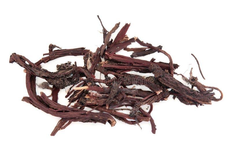 Корень травы Alkanet стоковые изображения rf