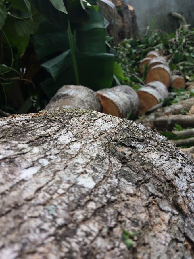корень стоковое фото rf