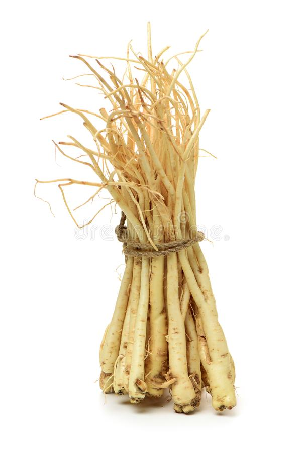 Корень platycodi корня использован обширно как противовоспалительное в обработке кашлей и холодов В Корее, завод стоковое фото