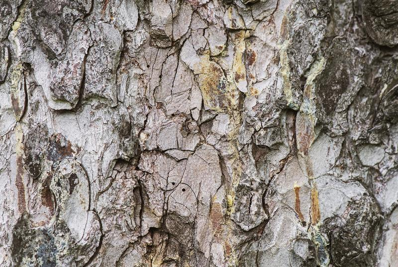 Коре дерева показывают вверх конец стоковые изображения