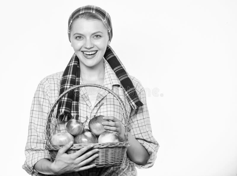 Корзина владением стиля садовника женщины деревенская с яблоками жмет на белой предпосылке Концепция времени сбора Женщина жизнер стоковые фотографии rf