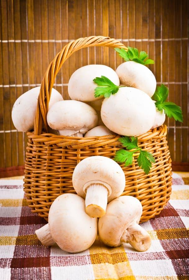 Корзина вполне свежих грибов champignon стоковое изображение rf