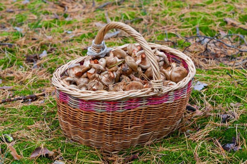 Download Корзина грибов в пуще стоковое изображение. изображение насчитывающей средства - 41656133