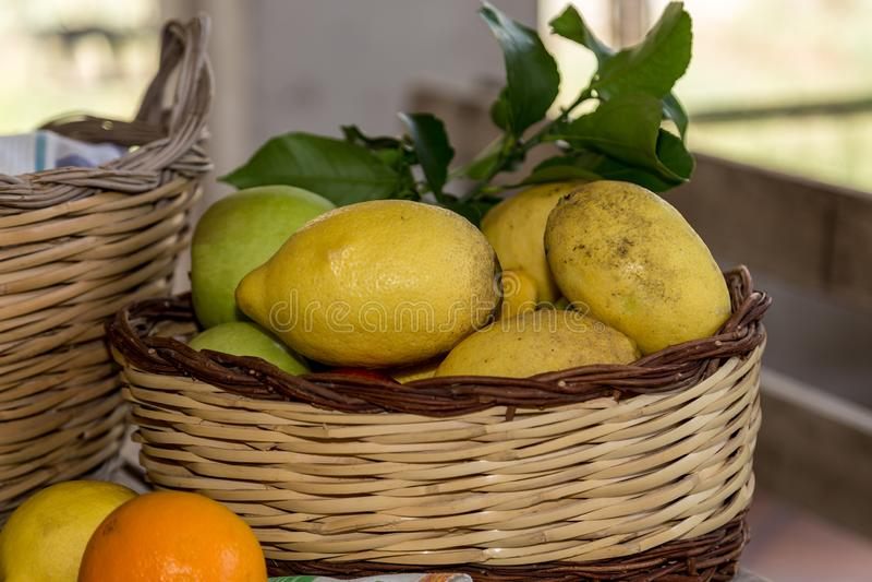 Корзина из свежих желтых лимонов, Сорренто, Италия стоковое изображение rf