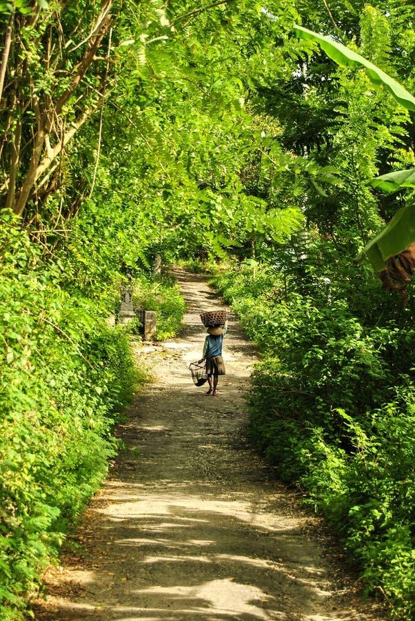Корзина нося азиатского традиционного фермера с сбором через лес стоковое фото rf