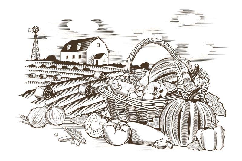 Корзина овощей иллюстрация вектора