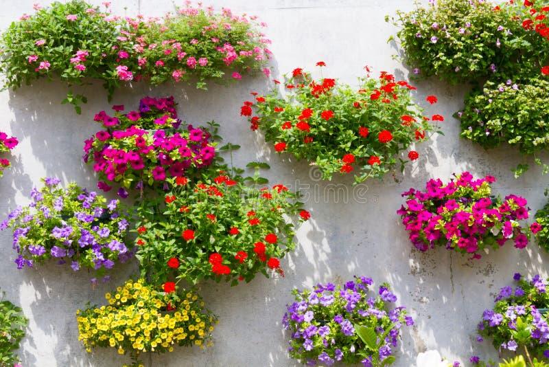 Корзина смертной казни через повешение на стене, полной цветков стоковое изображение