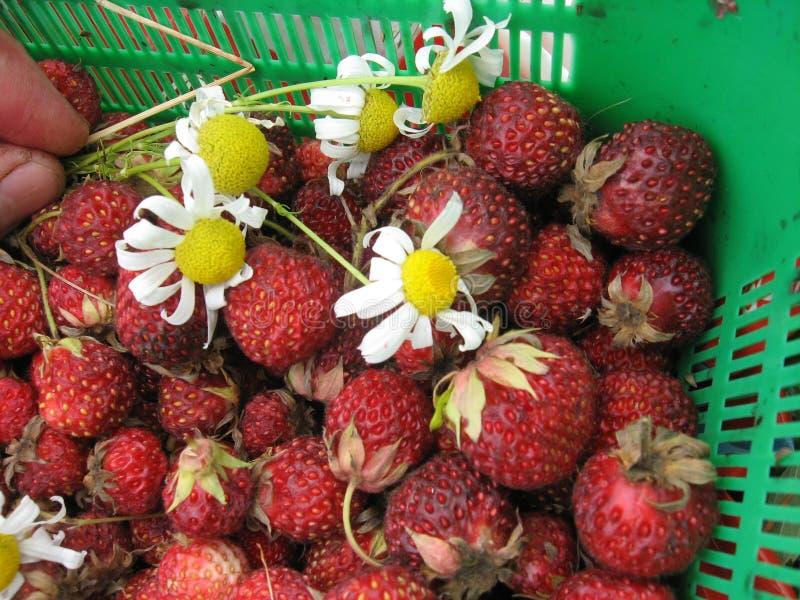 Корзина с дикими ягодами стоковая фотография rf