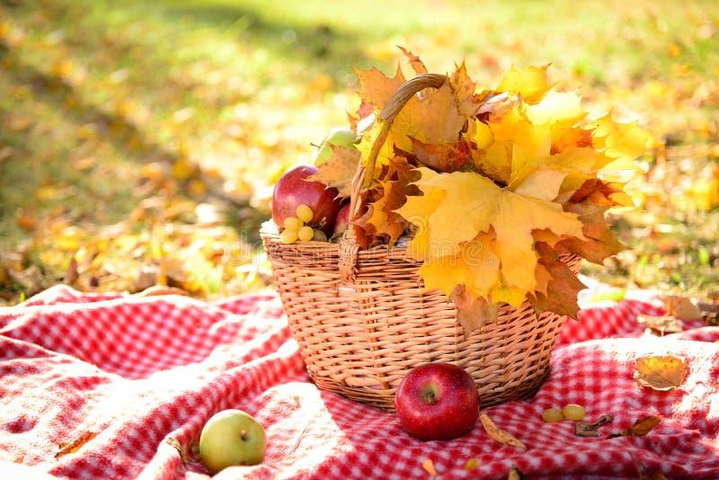 Корзина с листьями и плодоовощами осени стоковая фотография