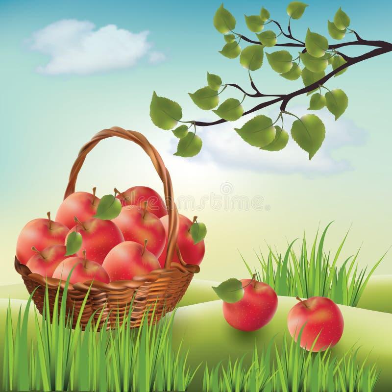 Корзина с яблоками Лужайка ландшафта, яблоня Иллюстрация ...
