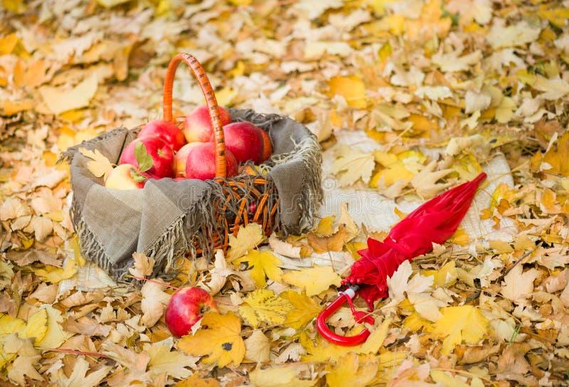 Корзина с яблоками на листьях осени в лесе стоковое изображение