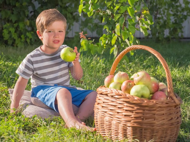 Корзина яблок приближает к ребенк Младенец есть яблоко внешнее стоковое фото rf