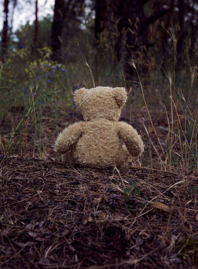 коричневая плюшевый мишка сидит назад в середине песочной дороги в лесе стоковые изображения