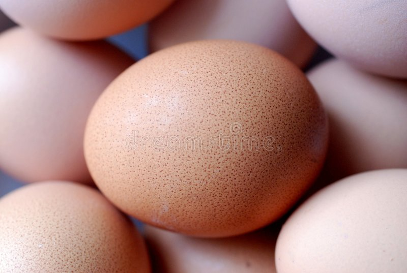 коричневое яичко крупного плана Стоковое фото RF