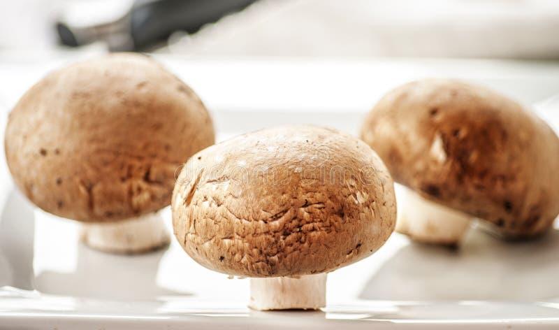 коричневые свежие грибы стоковые фото