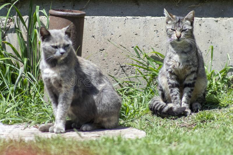 Коричневый кот и кот tabby стоковое изображение rf