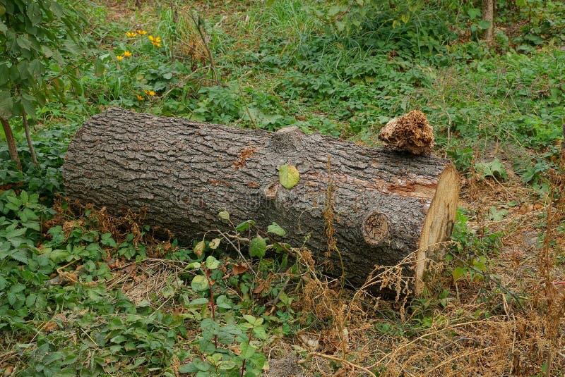 коричневый лес лежит в зеленой траве в природе стоковые изображения rf
