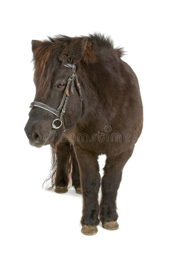коричневый пони Стоковая Фотография
