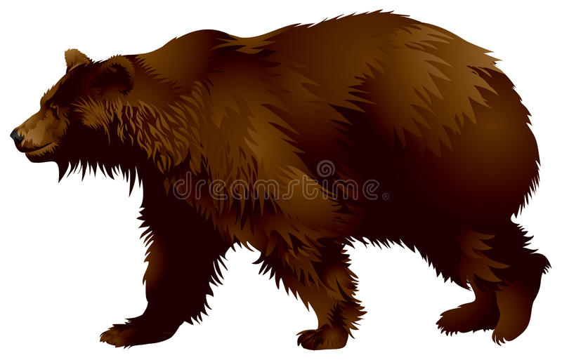 коричневый цвет медведя иллюстрация вектора