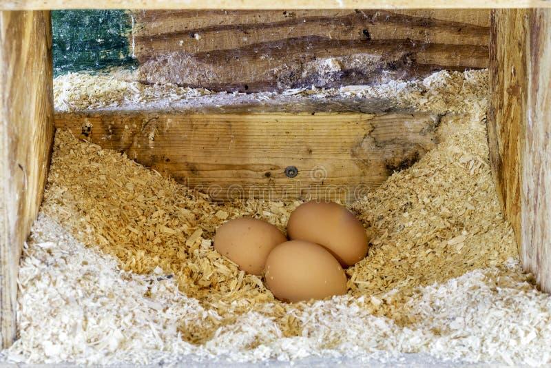 3 коричневых яичка свеже клали в естественный переворот цыпленка фермы, он стоковая фотография rf