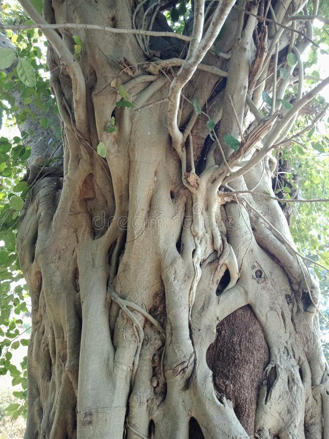 Корни выросли над деревом, корни дерева, который дерева лаяют текстура, обои предпосылки творения природы стоковые изображения rf