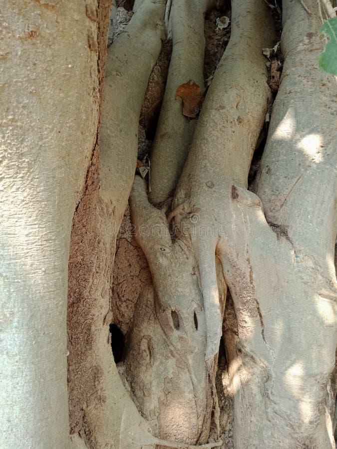 Корни дерева лаяют текстура, обои предпосылки творения природы стоковая фотография rf