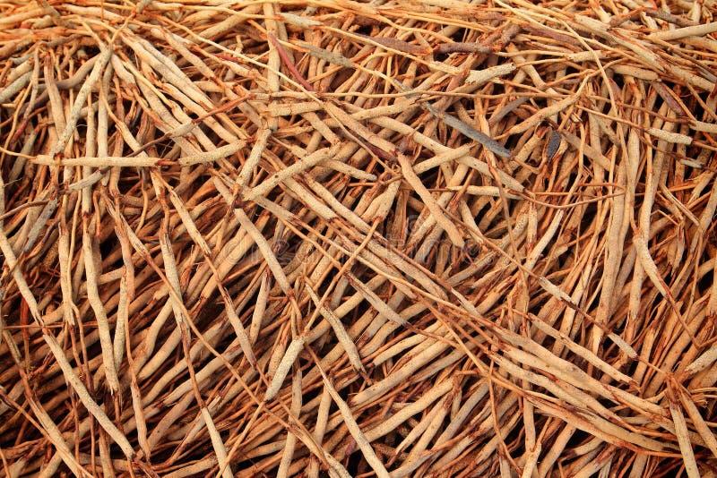 Корни кокосовой пальмы стоковое изображение rf