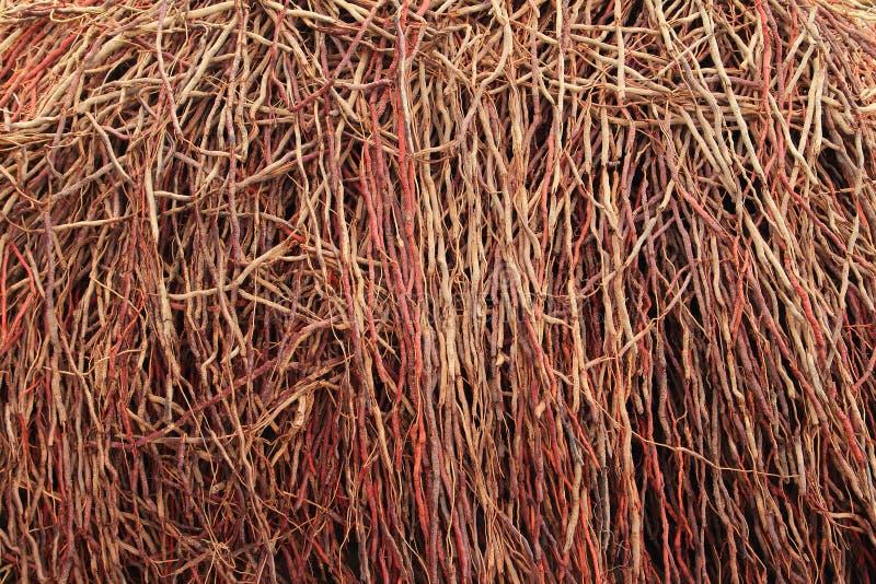 Корни кокосовой пальмы стоковые фото