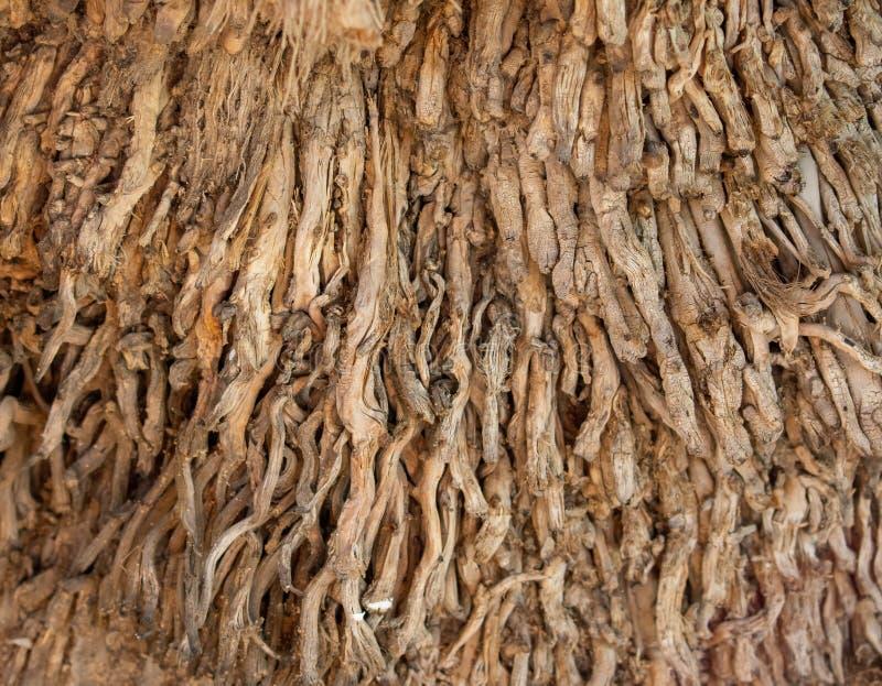 Корни пальмы стоковые изображения