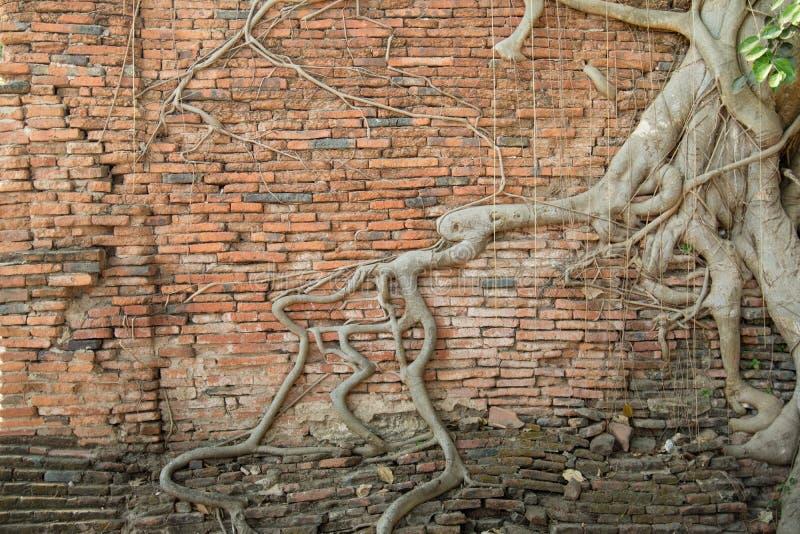 Корни старого кирпича wall2 стоковое фото