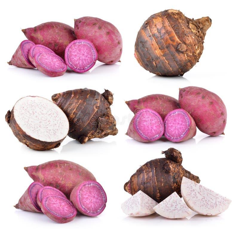 Корни таро и сладкий картофель на белой предпосылке стоковые фото