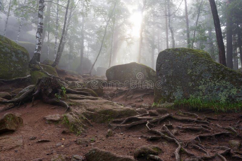 Корни, утесы и деревья стоковые фотографии rf