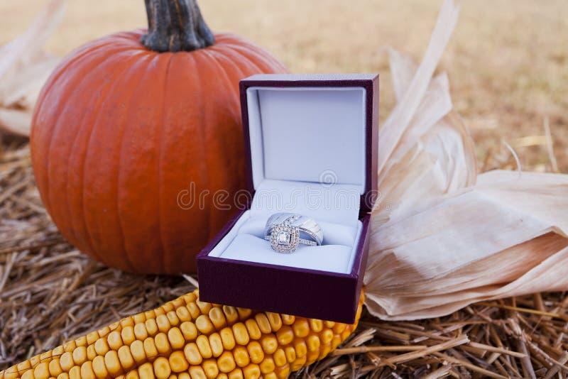 коробка звенит венчание стоковые изображения
