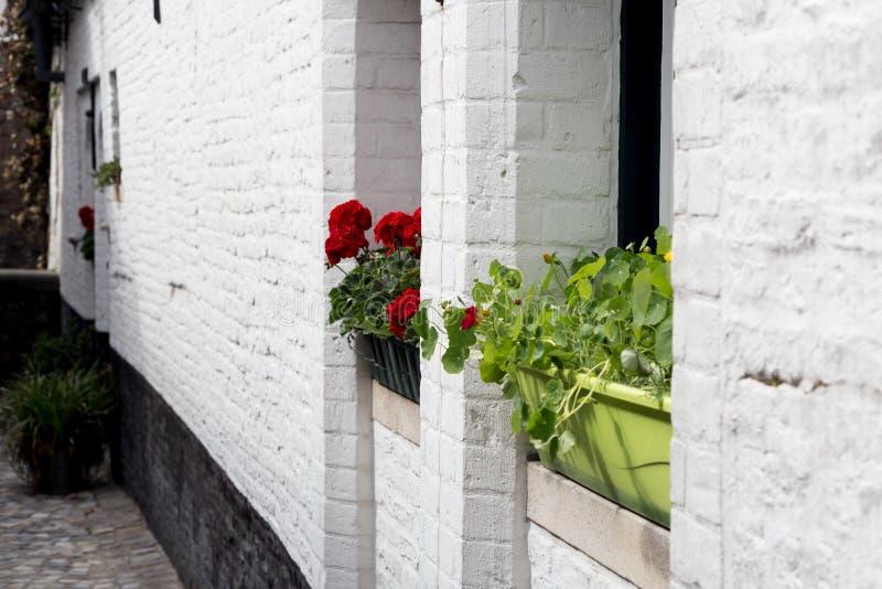 Коробки с цветками на белой кирпичной стене стоковые изображения rf