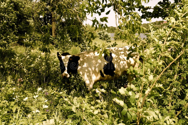 Корова в листве стоковое изображение