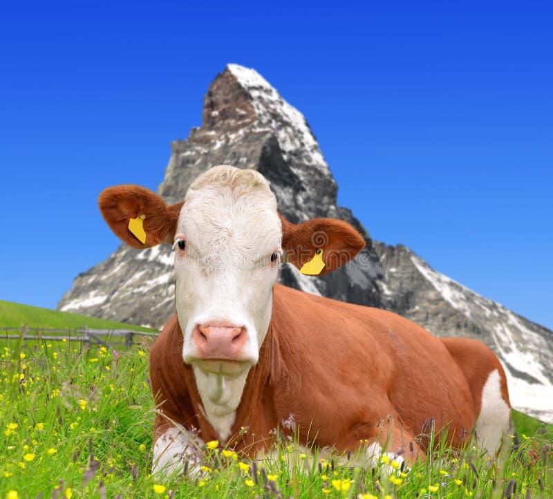 Download Корова в лужке стоковое фото. изображение насчитывающей корова - 33728046