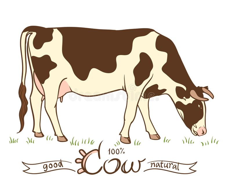 корова есть траву иллюстрация штока
