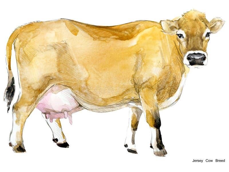 Корова Иллюстрация акварели коровы Порода доя коровы Порода коровы Джерси иллюстрация штока