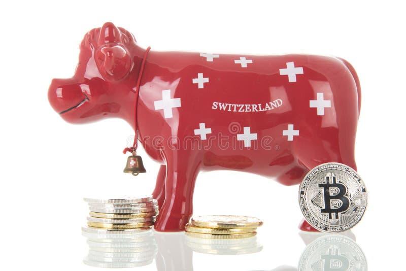 Корова копилки Швейцарии со сдержанными монетками стоковые изображения rf